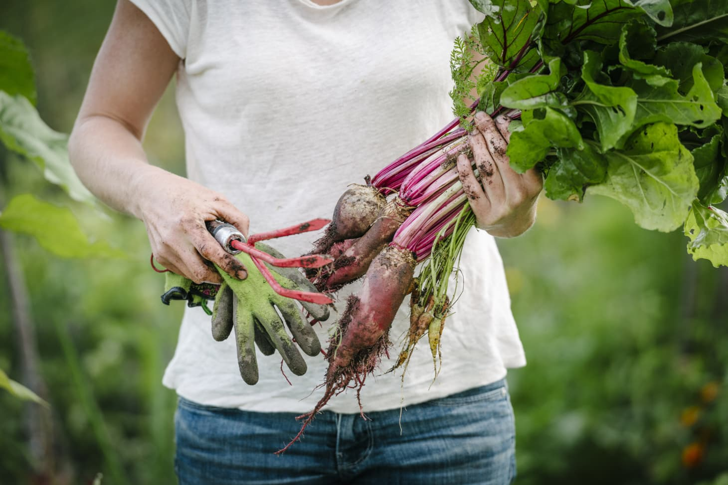Grow a Garden Salad with These 13 Vegetables You Can Plant in Early Spring
