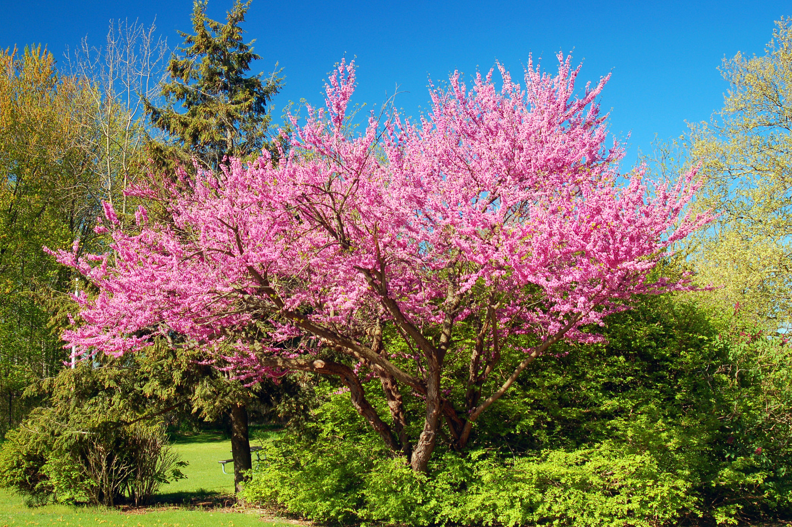 10 Ways to Love Spring in New Jersey