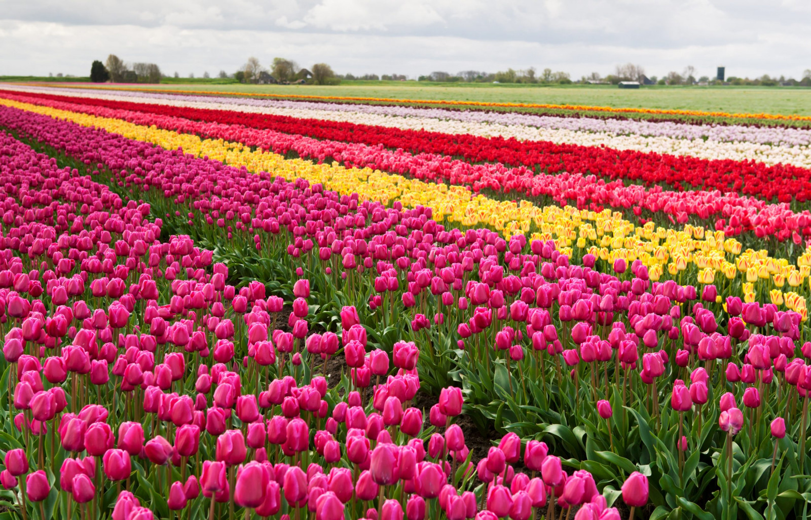 Experience Floral Paradise in the Heart of New Jersey